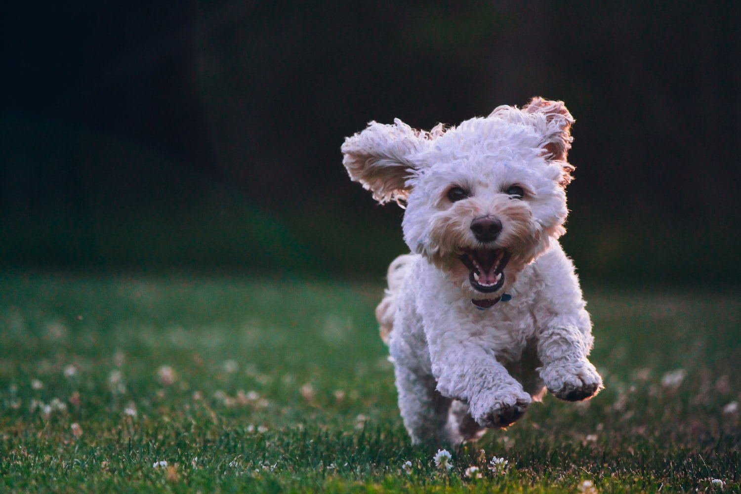5 ways to make sure your dog lives a long, healthy, happy life